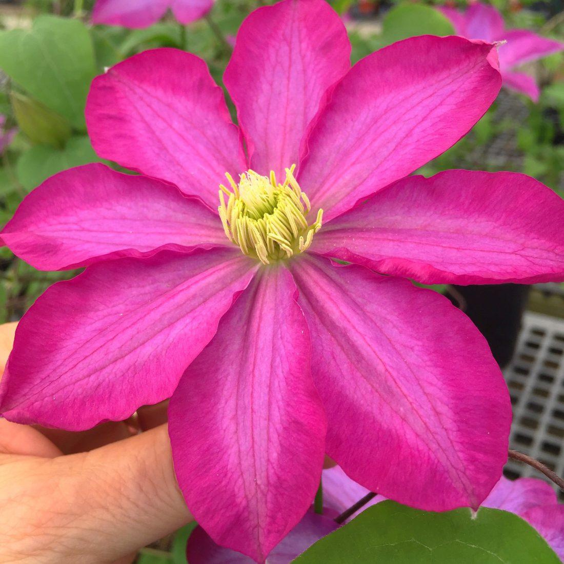 Flor de mi Jardin